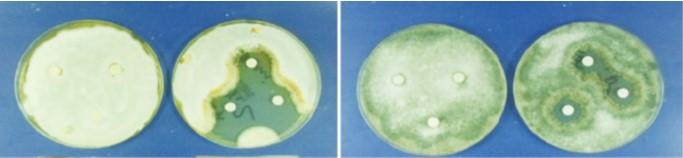 Antischimmelmittel ohne Dimethylfumarat