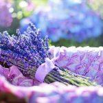 Frischeduft im Schuh - mit Lavendel